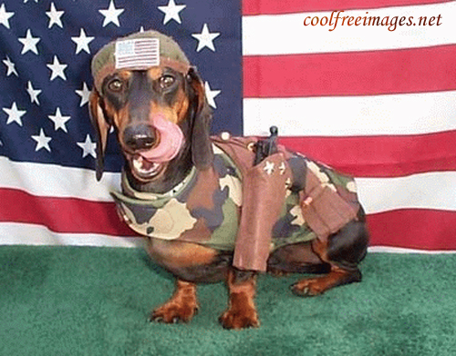 Free 4th July Pictures