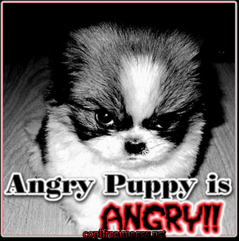 Best Angry Images