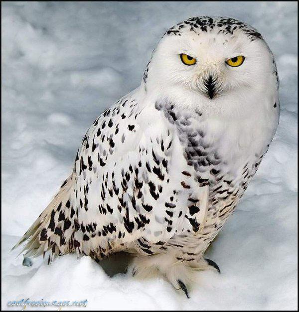 Free Bird Images