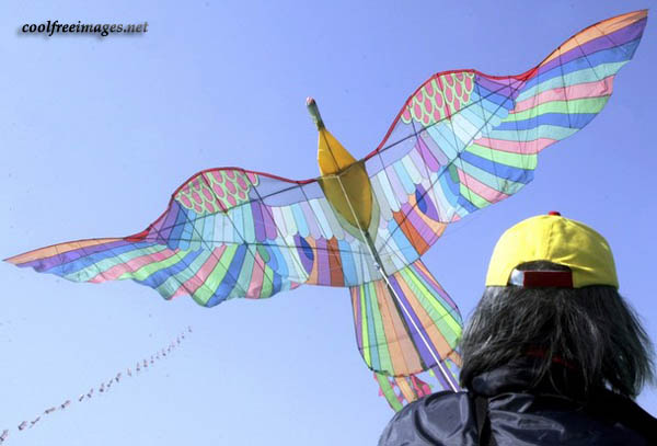 Free Basant - The Festival of Kites Pictures