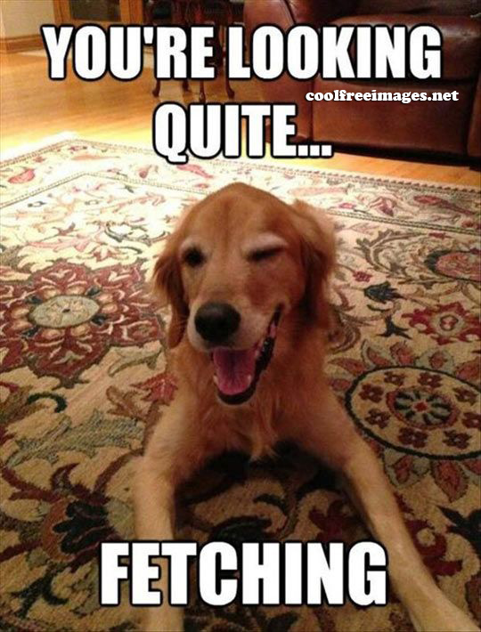 dog_pick_up_lines_01 best dog pick up lines images coolfreeimages net