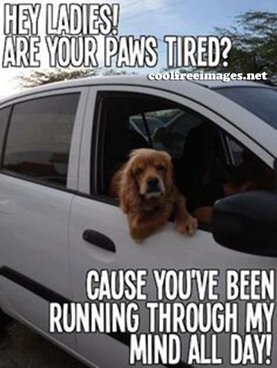 Best Dog PickUp Lines Images - Hey Ladies! are your paws tired? Cause you have been running through my mind all day.