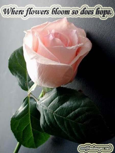 Best Flowers Images