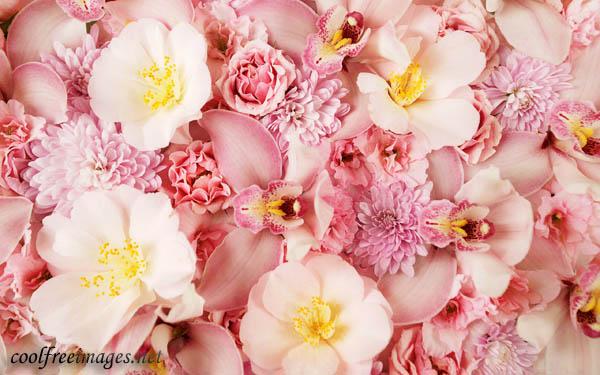 Online best Flowers images