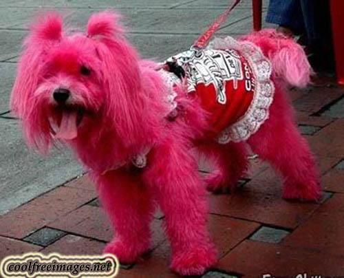 Online Pink Images