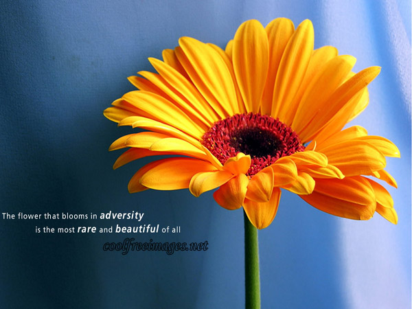 Thoughts- A Flower That Blooms In Adversity Is The Most Rare And Beautiful Of All